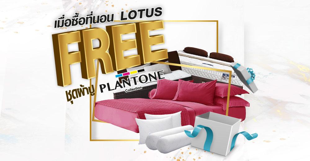 ซื้อที่นอน Lotus วันนี้ แถมฟรีชุดผ้าปูที่นอน Plantone